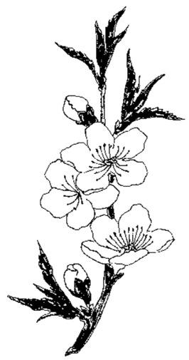 Zweig Blüten Knospen